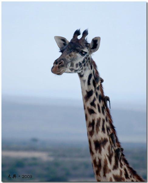 Африканское сафари. Кения, сентябрь 2009 года