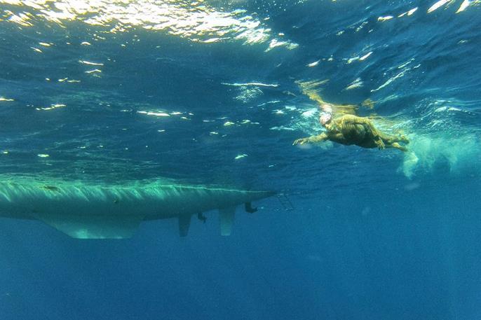 Израильтяне установили рекорд по дальности заплыва